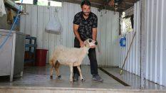 Maltepe Çınar Adak Kurban Satış Yeri