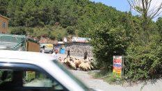 Maltepe Büyükbakkalköy Adak Kurban Satış Yeri