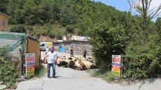 Pendik Ahmet yesevi Adak Kurban Satış Yeri