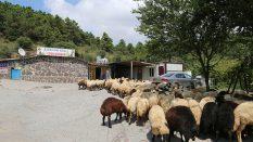 Anadolu Yakası En Ucuz Adak Satış Yeri